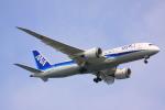 けいとパパさんが、羽田空港で撮影した全日空 787-8 Dreamlinerの航空フォト(飛行機 写真・画像)