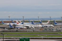 パピヨンさんが、羽田空港で撮影した日本航空 777-246/ERの航空フォト(飛行機 写真・画像)