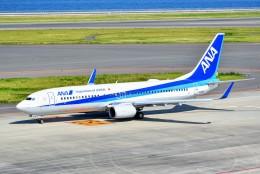 のぶさん。さんが、中部国際空港で撮影した全日空 737-881の航空フォト(飛行機 写真・画像)