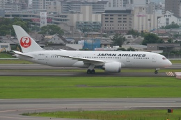 rjジジィさんが、伊丹空港で撮影した日本航空 787-8 Dreamlinerの航空フォト(飛行機 写真・画像)
