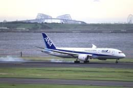 mahiちゃんさんが、羽田空港で撮影した全日空 787-8 Dreamlinerの航空フォト(飛行機 写真・画像)