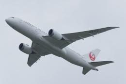 木人さんが、成田国際空港で撮影した日本航空 787-8 Dreamlinerの航空フォト(飛行機 写真・画像)