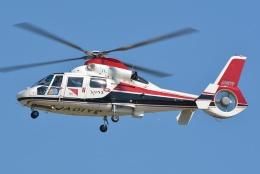 ブルーさんさんが、名古屋飛行場で撮影した読売新聞 AS365N2 Dauphin 2の航空フォト(飛行機 写真・画像)