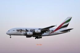 キットカットさんが、成田国際空港で撮影したエミレーツ航空 A380-861の航空フォト(飛行機 写真・画像)