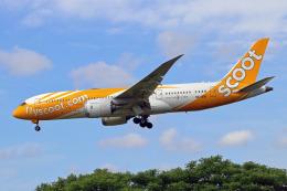szkkjさんが、成田国際空港で撮影したスクート 787-8 Dreamlinerの航空フォト(飛行機 写真・画像)