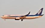 鉄バスさんが、成田国際空港で撮影した全日空 737-881の航空フォト(飛行機 写真・画像)