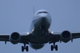 ぼのさんが、鹿児島空港で撮影した全日空 737-881の航空フォト(飛行機 写真・画像)