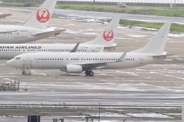 キイロイトリさんが、羽田空港で撮影した日本航空 737-846の航空フォト(飛行機 写真・画像)