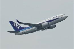jutenLCFさんが、中部国際空港で撮影した全日空 737-781の航空フォト(飛行機 写真・画像)