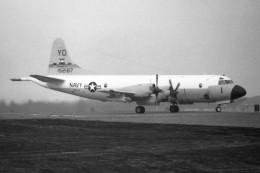apphgさんが、厚木飛行場で撮影したアメリカ海軍 P-3 Orionの航空フォト(飛行機 写真・画像)
