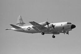 apphgさんが、厚木飛行場で撮影したアメリカ海軍 P-3C Orionの航空フォト(飛行機 写真・画像)