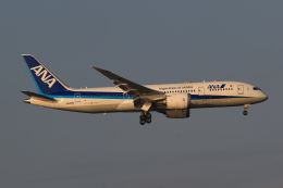 ryu330さんが、羽田空港で撮影した全日空 787-8 Dreamlinerの航空フォト(飛行機 写真・画像)