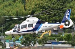 とびたさんが、静岡ヘリポートで撮影したオールニッポンヘリコプター AS365N3 Dauphin 2の航空フォト(飛行機 写真・画像)