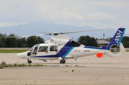 syo12さんが、函館空港で撮影したオールニッポンヘリコプター AS365N3 Dauphin 2の航空フォト(飛行機 写真・画像)