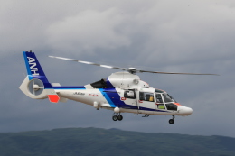 Tomochanさんが、函館空港で撮影したオールニッポンヘリコプター AS365N3 Dauphin 2の航空フォト(飛行機 写真・画像)