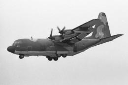 apphgさんが、厚木飛行場で撮影したアメリカ空軍 C-130 Herculesの航空フォト(飛行機 写真・画像)