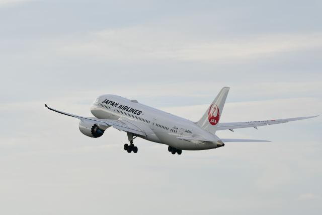 パールホワイトさんが、伊丹空港で撮影した日本航空 787-8 Dreamlinerの航空フォト(飛行機 写真・画像)