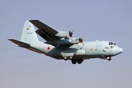Nobu-oji_NEXUS6さんが、厚木飛行場で撮影した航空自衛隊 C-130H Herculesの航空フォト(飛行機 写真・画像)