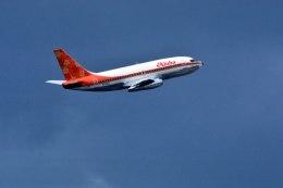 パール大山さんが、ダニエル・K・イノウエ国際空港で撮影したアロハ航空 737-297/Advの航空フォト(飛行機 写真・画像)
