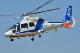 ブルーさんさんが、東京ヘリポートで撮影したオールニッポンヘリコプター AS365N2 Dauphin 2の航空フォト(飛行機 写真・画像)