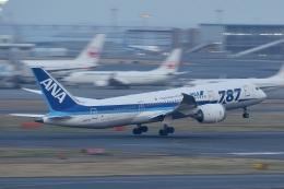 飛行機ゆうちゃんさんが、羽田空港で撮影した全日空 787-8 Dreamlinerの航空フォト(飛行機 写真・画像)