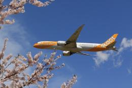 inyoさんが、成田国際空港で撮影したスクート 787-9の航空フォト(飛行機 写真・画像)
