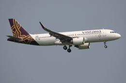 TIA spotterさんが、スワンナプーム国際空港で撮影したビスタラ A320-251Nの航空フォト(飛行機 写真・画像)