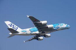ladyinredさんが、成田国際空港で撮影した全日空 A380-841の航空フォト(飛行機 写真・画像)