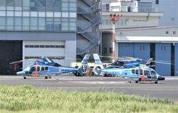 ヘリオスさんが、東京ヘリポートで撮影した警視庁 EC155B1の航空フォト(飛行機 写真・画像)