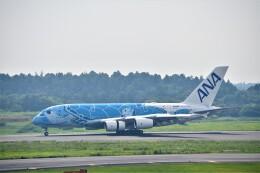 金魚さんが、成田国際空港で撮影した全日空 A380-841の航空フォト(飛行機 写真・画像)