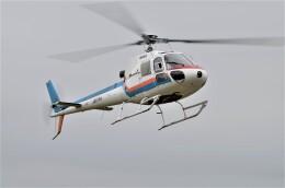 ヘリオスさんが、東京ヘリポートで撮影した東邦航空 AS350B Ecureuilの航空フォト(飛行機 写真・画像)