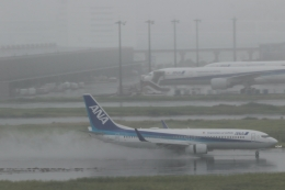 GNPさんが、羽田空港で撮影した全日空 737-881の航空フォト(飛行機 写真・画像)