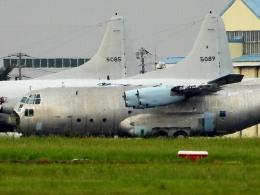 チャレンジャーさんが、厚木飛行場で撮影した海上自衛隊 C-130Rの航空フォト(飛行機 写真・画像)