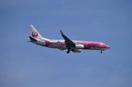 レドームさんが、羽田空港で撮影した日本トランスオーシャン航空 737-8Q3の航空フォト(飛行機 写真・画像)