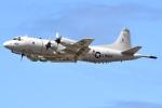 JRF spotterさんが、ダニエル・K・イノウエ国際空港で撮影したアメリカ海軍 P-3C Orionの航空フォト(飛行機 写真・画像)