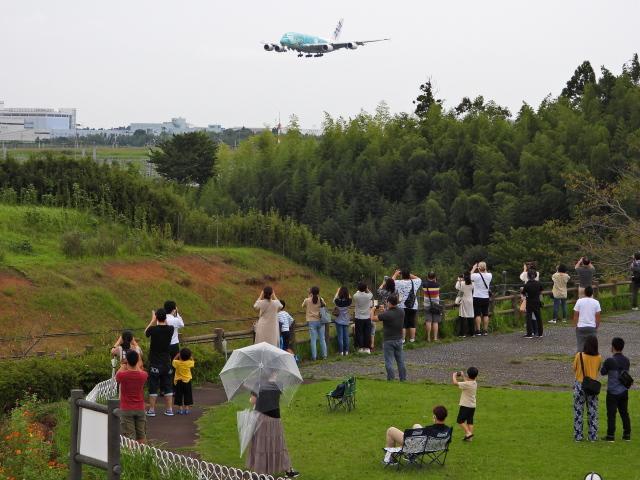 チャレンジャーさんが、成田国際空港で撮影した全日空 A380-841の航空フォト(飛行機 写真・画像)