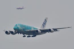 chinbariさんが、成田国際空港で撮影した全日空 A380-841の航空フォト(飛行機 写真・画像)