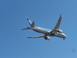 ねこねこちゃんさんが、羽田空港で撮影した全日空 787-9の航空フォト(飛行機 写真・画像)