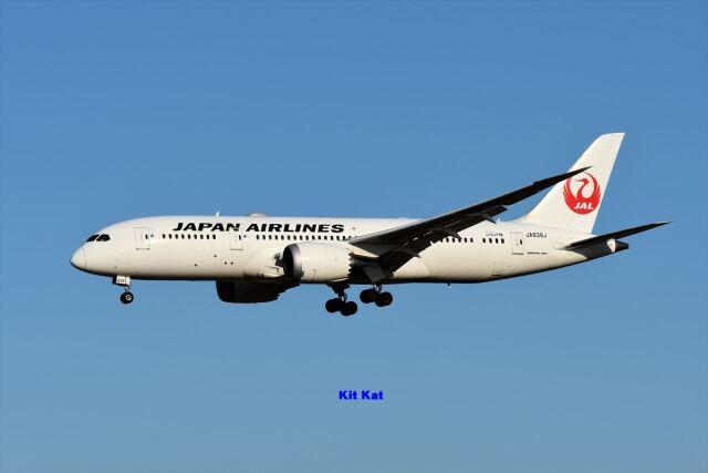 キットカットさんが、成田国際空港で撮影した日本航空 787-8 Dreamlinerの航空フォト(飛行機 写真・画像)