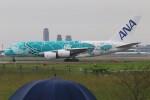 青春の1ページさんが、成田国際空港で撮影した全日空 A380-841の航空フォト(飛行機 写真・画像)