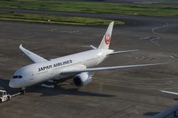 SIさんが、羽田空港で撮影した日本航空 787-8 Dreamlinerの航空フォト(飛行機 写真・画像)