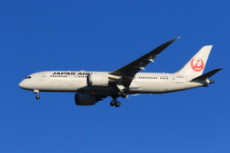 航空フォト:JA834J 日本航空 787-8 Dreamliner