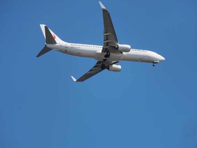 ねこねこちゃんさんが、羽田空港で撮影した日本航空 737-846の航空フォト(飛行機 写真・画像)