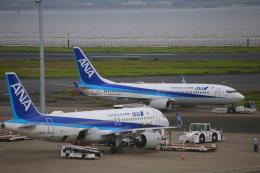 乙事さんが、羽田空港で撮影した全日空 737-8ALの航空フォト(飛行機 写真・画像)