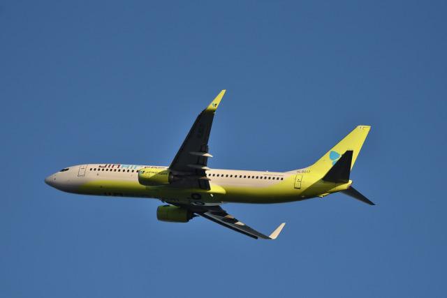 we love kixさんが、関西国際空港で撮影したジンエアー 737-8SHの航空フォト(飛行機 写真・画像)
