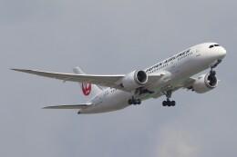BOEING737MAX-8さんが、成田国際空港で撮影した日本航空 787-8 Dreamlinerの航空フォト(飛行機 写真・画像)