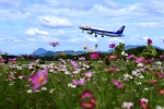 くれないさんが、高松空港で撮影した全日空 A321-272Nの航空フォト(飛行機 写真・画像)