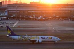 シグナス021さんが、羽田空港で撮影したスカイマーク 737-8FHの航空フォト(飛行機 写真・画像)