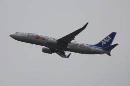 m_aereo_iさんが、新千歳空港で撮影した全日空 737-881の航空フォト(飛行機 写真・画像)