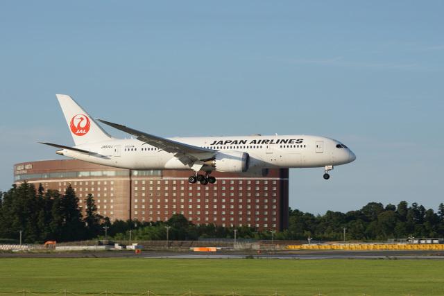 神宮寺ももさんが、成田国際空港で撮影した日本航空 787-8 Dreamlinerの航空フォト(飛行機 写真・画像)